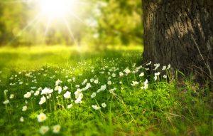 Exploiter la lumière du soleil pour faire des economies